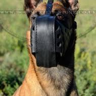 belgian shepherd uk belgian malinois muzzles uk