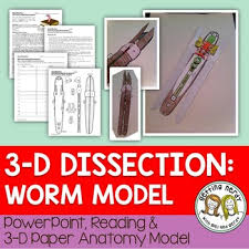 earthworm dissection 3 d paper model by getting nerdy with mel