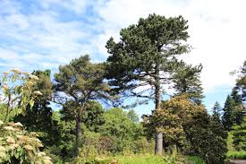 image gallery scottish trees