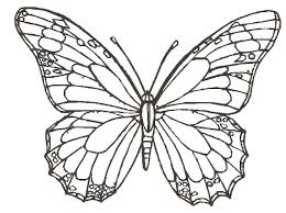 simple butterfly flower sketch image how to draw butterfly