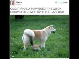 Meme Fox - the quick brown fox jumps over the lazy dog atc memes