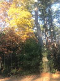 thanksgiving phenology place redstone pines phenology