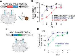 Cta Map Red Line Parabrachial Calcitonin Gene Related Peptide Neurons Mediate