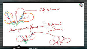 what is pollination sexual reproduction in flowering plants