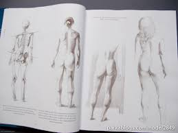 book review anatomy drawing human animal comparative