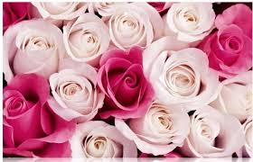 rose mural wallpaper wall murals you u0027ll love