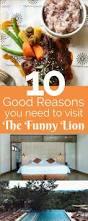 best 25 funny lion ideas on pinterest lion memes crazy cats