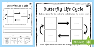 butterfly life cycle sentence writing activity sheet writing