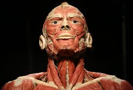 Anatomy The Human Body Eye Popping Body Worlds Rx Exhibit Coming To Houston For Four