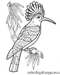 hoopoe bird free coloring pages kids