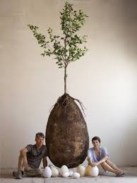 cremation tree two designers want to turn your into a tree with these eco