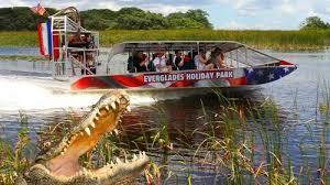 fan boat tours miami everglades airboat tour alligator show miami expedia
