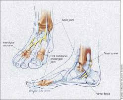 Foot Ligament Anatomy Diagnostic And Therapeutic Injection Of The Ankle And Foot