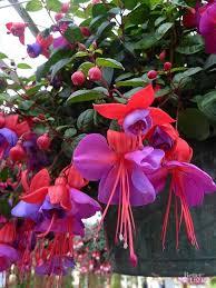 best 25 shade flowers ideas on pinterest shade plants shade