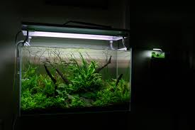 Aquascaping World Interview With George Farmer Acuario Rosa