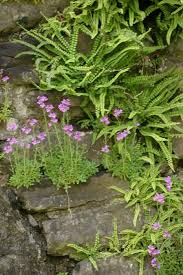 105 best crevice and rock gardens images on pinterest