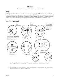 17 meiosis s meiosis chromosome