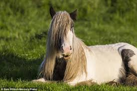 hairstyles for horses hipster horse compared to red hot chili peppers singer anthony