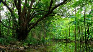 nature green trees peaceful river hd wallpaper wallpapers13 com