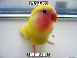 Parrot Meme - see you