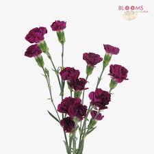 Purple Carnations Purple Flowers U2013 Diy Purple Wedding Flowers U2013 Bloomsbythebox Com
