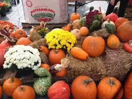 brooklyn bridge boot camp are these pumpkin fall favorites