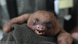 Angry Sloth Meme - angry sloth gif 4 gif images download