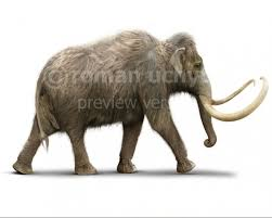 mammoth white background