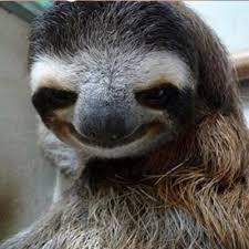 Sexy Sloth Meme - squad sexy sloths brawl games minecraft server network