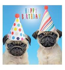 Pug Birthday Meme - list of synonyms and antonyms of the word happy birthday pug