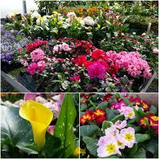 spring plants fill robertson u0027s greenhouse robertson u0027s flowers