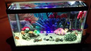 Finding Nemo Aquarium Fish 1000 Aquarium Ideas