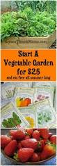 Raised Gardens You Can Make by Start A Vegetable Garden For 25 Vegetable Garden Plants And
