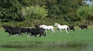 chambre d hote dans une manade en camargue randonnée à cheval camargue week end ou deux jours decouverte d