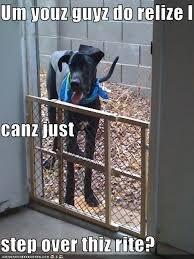 Great Dane Meme - has a hotdog great dane page 11 loldogs n cute puppies