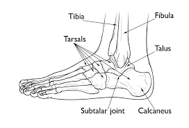 Top Foot Anatomy Top 5 Fridays 5 Patterns Of Plantarfasciitis Modern Manual