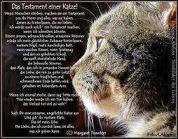 s e katzen spr che 276 best cats images on hilarious animals animal