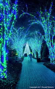 glowing trees covered in black and neon green lights glow in the