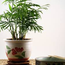 home plants keep your home stress free and air clean with house plants