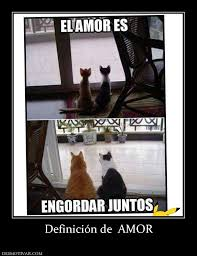 Meme Definicion - definici祿n de amor my phrases pinterest humor memes and
