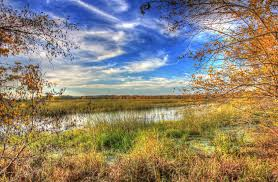 Mississippi landscapes images Free stock photo of marshy landscape on the backwaters at perrot jpg