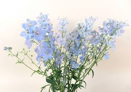 delphinium flower cut flower care and handling delphinium floralife