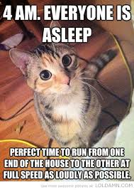 Awesome Quotes About Cats Being - has alma been reading this cats and knitting pinterest funny