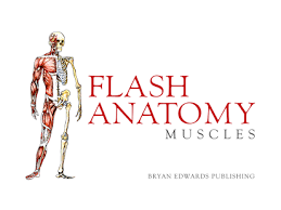 Google Body Anatomy Flash Anatomy Muscles Free Android Apps On Google Play