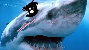 Shark Meme - tsundere sharks know your meme