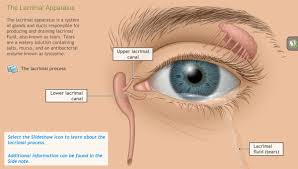 Eye Ducts Anatomy A D A M Ondemand Understanding The Anatomy Of The Visual System