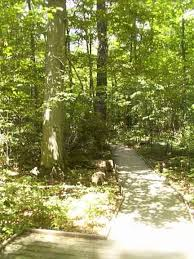 Ohio forest images Johnson woods ohio hiking trail pictures movie jpg