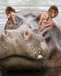 sle resume journalist position in kzn wildlife cing border jumper killed in suspected hippo attack report news24