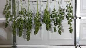 best way to dry marijuana youtube
