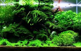 home accessories amazing aquascape designs with aquarium lawn and